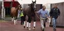 Emirates SkyCargo brings the world's best racehorses to Dubai(SS)