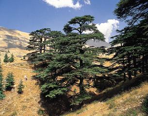 Vols à destination de Beyrouth, Liban