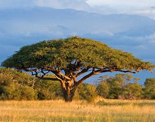 Vols vers Harare, Zimbabwe