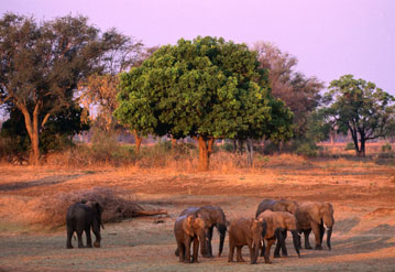 Flights to Zambia   Emirates City guides