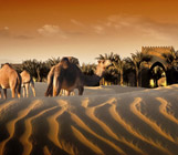 منتجع وسبا باب الشمس الصحراوي
