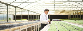 Emirates Hydroponics Farms, Dubai