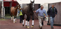 Emirates SkyCargo brings the world's best racehorses to Dubai
