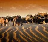 Курорт Bab Al Shams Desert Resort & Spa